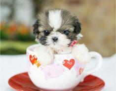 Site reuniu dezenas de imagens de cães em miniatura em poses curiosas (Foto: Reprodução)