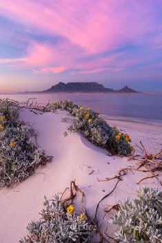 Place To Shoot, Cape Town, Dolphins, Landscape Photography, Things That Bounce, Sunrise, Adventure, Beach, Places