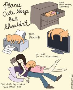They make comfortable nests everywhere. | 6 Signs Your Cats Actually Run Your Home