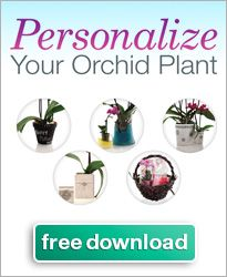 """""""Ice Orchids"""": great site w videos on various aspects of caring for ice orchids..."""