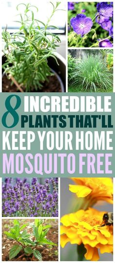 These are such great home hacks! I'm so glad I found these gardening hacks! Now I have some great mosquito repelling plants for my home! Definitely pinning these home tips! #homehacks #gardeninghacks #gardeningtips #hometips #planting #plants #garden #gardens #gardening #gardeningadvice #gardenideas