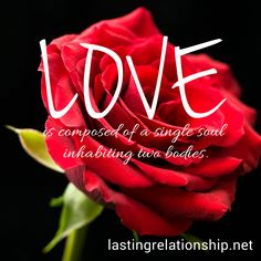 Love is composed of a single soul inhabiting two bodies. Romantic Love, Bodies, Neon Signs, Quotes, Relationships, Tips, Dating, Quote