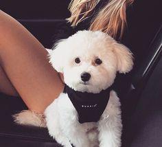 Buddy (taken from Roxannes Instagram account)