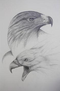 Pencil Drawings Of Animals, Dark Art Drawings, Animal Sketches, Bird Drawings, Easy Drawings, Eagle Sketch, Good Morning Dear Friend, Eagle Drawing, Wildlife Art