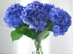 Get hydrangea flower facts and growing tips, as well as lifestyle and design uses for these beautiful flowers at HGTV Gardens. Types Of Hydrangeas, Hydrangea Colors, Hydrangea Care, Hydrangea Not Blooming, Hydrangea Flower, Hydrangea Varieties, Flowering Shrubs, Garden Shrubs, Lawn And Garden