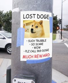 Funny pictures about Lost Doge. Oh, and cool pics about Lost Doge. Also, Lost Doge. Cute Animal Memes, Funny Animal Pictures, Funny Animals, Animal Jokes, Dog Jokes, Funny Jokes, Best Memes, Dankest Memes, Funny