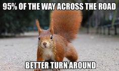 13 Funny Squirrel Photos and Memes - Mandatory
