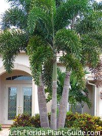 Landscape Design South Florida Landscape Design Architect