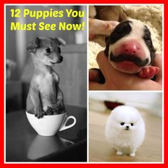 It is a scientific fact that perusing through puppy photos helps physically calm you.