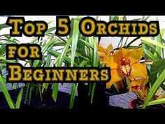"▶ ORCHID CARE : TOP 5 Orchids for Beginners and Tips to BLOOM Them. ""how to care for orchids"" - YouTube"