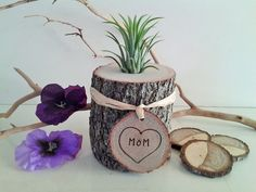 Air Plant Terrarium -  Mothers day gift - Tree trunk with Personalized Engraved tag - Holiday gift - Tree slices - Air plants by JTLCREATIONS, $20.00 USD