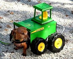 This Dachshund has got his John Deere on! This Halloween we celebrate disabled dogs with some of the most creative costumes ever made!