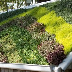 Roof Gardens: variety of colours