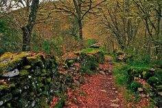 Otoño en Galicia.  Descubre el encanto del Otoño en Galicia. Hoteles y casas rurales en www.trotamundi.es
