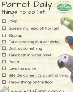 Daily list - Parrot                                                                                                                                                                                 More Daily List, Parrots, Fun, Fin Fun, Lol, Funny, Hilarious