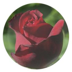 Elegant Red Velvet Rose Dinner Plate - $29.95 - Elegant Red Velvet Rose Dinner Plate - by RGebbiePhoto @ zazzle - #rose #flower #garden - A beautiful rosebud, deep velvet red in color, in a spring garden. Strong red and green theme, this elegant rose adds a touch of class to any occasion. Elegance and Romance, a lover's flower. A definite must for red rose lovers!