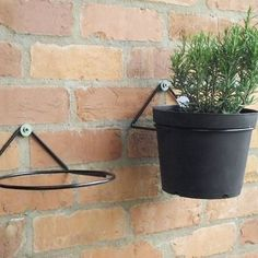 indoor hanging Two plant pot ring mounted on the wall. Two plant pot ring mounted on the wall. Wall Plant Pot, Wall Plant Holder, Hang Plants On Wall, Wall Hanging Plant Pots, Wall Mounted Planters, Diy Hanging, Plant Holders, Hanging Plants Outdoor, Hanging Flower Pots