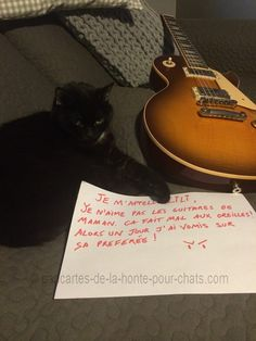 « I'm Lili. I don't like my mum guitars. It's hurt my hears so, one day, I throw up on her favorite ! » #lolcats #shameyourpet #shameyourcat #cat #cats #chats
