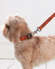 How to select a comfortable and stylish pet collar