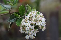 Cut to the Chase! Winter pruning tips for shrubs you can put into practice now.