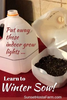Use your milk jugs and sow your seeds . in the winter! There are very few things in life that are SO easy yet work SO well. Winter Sowing is one of them. Throw away those indoor grow lights. Sow seeds the easy way and fill your garden wit Unique Garden, Diy Garden, Garden Ideas, Garden Projects, Garden Plants, Plants Indoor, Shade Garden, Garden Inspiration, Terrace Ideas