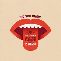 Dental Trivia: Ever burned your tongue? Ever noticed it heals super quick! That's because a tastebud has a life cycle of less than 2 weeks! Dental Quotes, Dental Humor, Dental Hygiene, Dental Care, Dental Fun Facts, Holistic Dentist, Dental World, Fun Facts For Kids, Fun Fact Friday