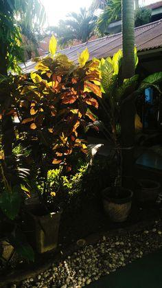Sun kissed #senja #photography #leaf #sun #afternoon