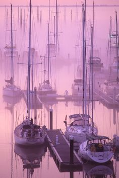Boats Harbored in the Mist, Ashley River, Charleston, SC