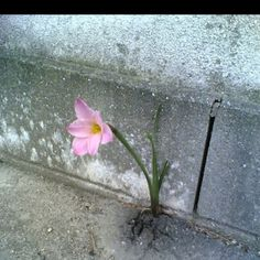 Certain things in life were put there just to brighten your day :)