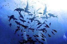 shark feed at north horn by melissa.fiene, via Flickr