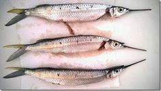 fish Food Blogs, Good Food, Fish, Healthy Meals, Eating Well, Ichthys