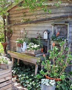 🌸🍃🌸🇬🇧 It's getting greener and greener behind the potting shed😊🍃🌿We had a frosty night but I tried to minimize damages by covering my… Farm Gardens, Small Gardens, Outdoor Gardens, Garden Cottage, Garden Pots, Home And Garden, Patio Plants, Garden Stones, Indoor Garden