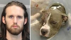 Tennessee man pounds his pit bull dog & tosses the helpless animal over high fence! Act Now!