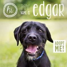Hi. My name is Edgar. I'm looking for my forever home.  These adoption posters are amazing.