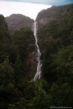 Tasmania, Day Walk to Montezuma Falls near Rosebery Ben Lomond, Giant Tree, Montezuma, Future Travel, Tasmania, Australia Travel, North West, Places To See, Beautiful Places