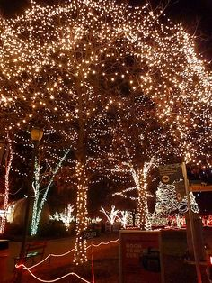 Toledo Zoo, Lights Before Christmas
