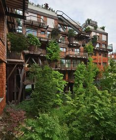 Voici l'évolution de la cabane dans un arbre : c'est carrément un immeuble ! Et en plus, ça protège de la pollution...