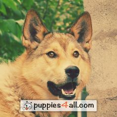 Top 50 Breeds ebook Giveaway - Puppies 4 All - 2019 Your Best Friend, Best Friends, Loyal Friends, Your Dog, Husky, Corgi, Puppies, Awesome, Amazing