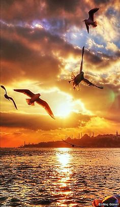 Breath taking scenery. Beautiful Sunrise, Beautiful Birds, Beautiful World, Beautiful Places, Beautiful Pictures, Amazing Sunsets, Amazing Nature, Sunset Photography, Landscape Photography