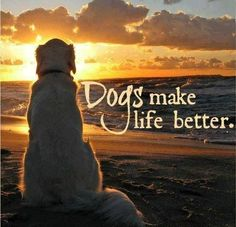 Very true ... I can't imagine my life without my dogs <3