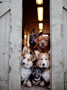 """"""" I think about my friend Pixie who now has 11 dogs(w/puppies on the way),& that this will be them when I go visit in Arizona. I see Hotel for Dogs, the movie : ) Baby Dogs, Pet Dogs, Dog Cat, Rescue Dogs, Pet Pet, Pet Puppy, Animals And Pets, Funny Animals, Cute Animals"""