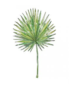 PALM LEAF - Watercolor illustration Art Print by Good Objects