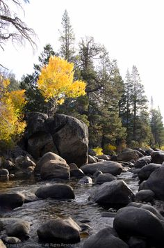 Self-Critique: Tree-Sprouting Boulder, River