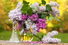 Lilacs | Flickr - Photo Sharing!