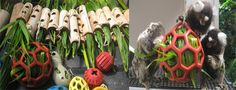 Stuff palm leaves and other shredders into refillable toys to provide a foraging/destructible toy for your birds