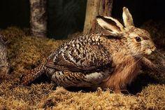 นิยาย เรื่องจริงทะลุโลก (Extension) > ตอนที่ 446 : 10 สัตว์ลึกลับหลอกลวง : Dek-D.com - Writer