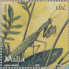 Malta - Insects 2005