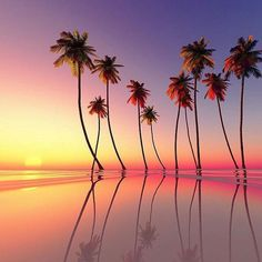 Gorgeous Sunset with beautiful palm trees <3