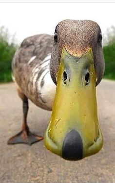 Duck ❤️ dog mask!  Can't unsee that!