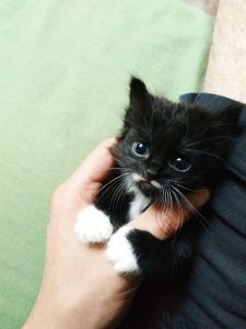 Cute Cats And Kittens, Baby Cats, Kittens Cutest, Funny Kitties, I Love Cats, Funny Dogs, Cute Baby Animals, Animals And Pets, Farm Animals